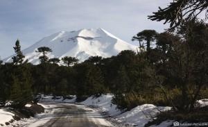 peumahue  cabañas de montaña con araucarias milenarias y bosques de árboles nativos