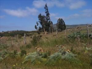 vendo campo 200 hectareas huaquen v región