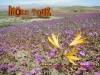 More Tour Agencia de Viajes y Turismo  Desierto Florido Atacama Chile