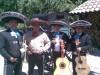 100 % serenatas sal y tequila serenatas mariachis